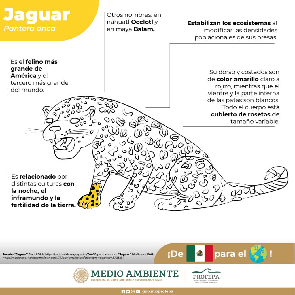 fauna en México